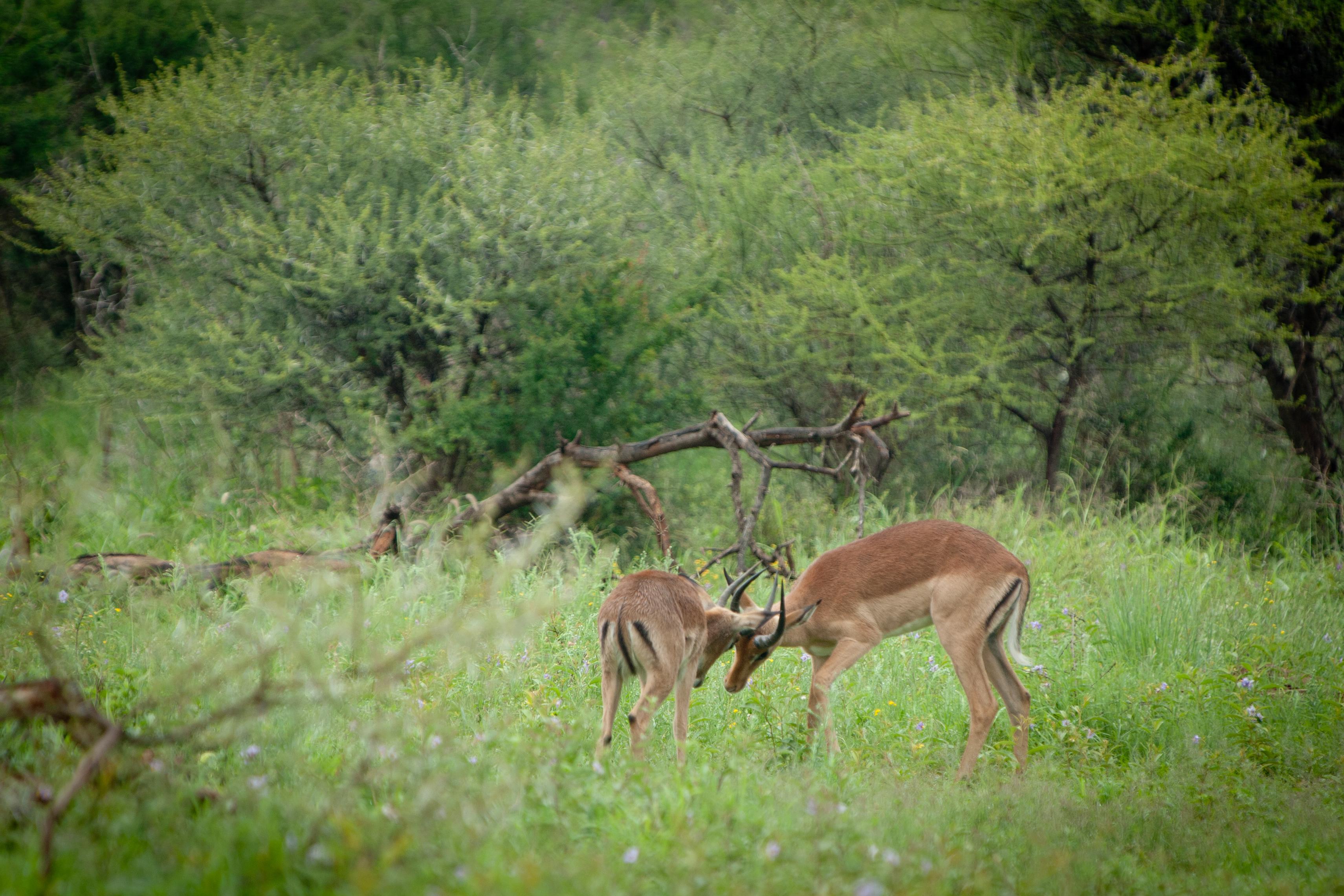 Sudafrica-215