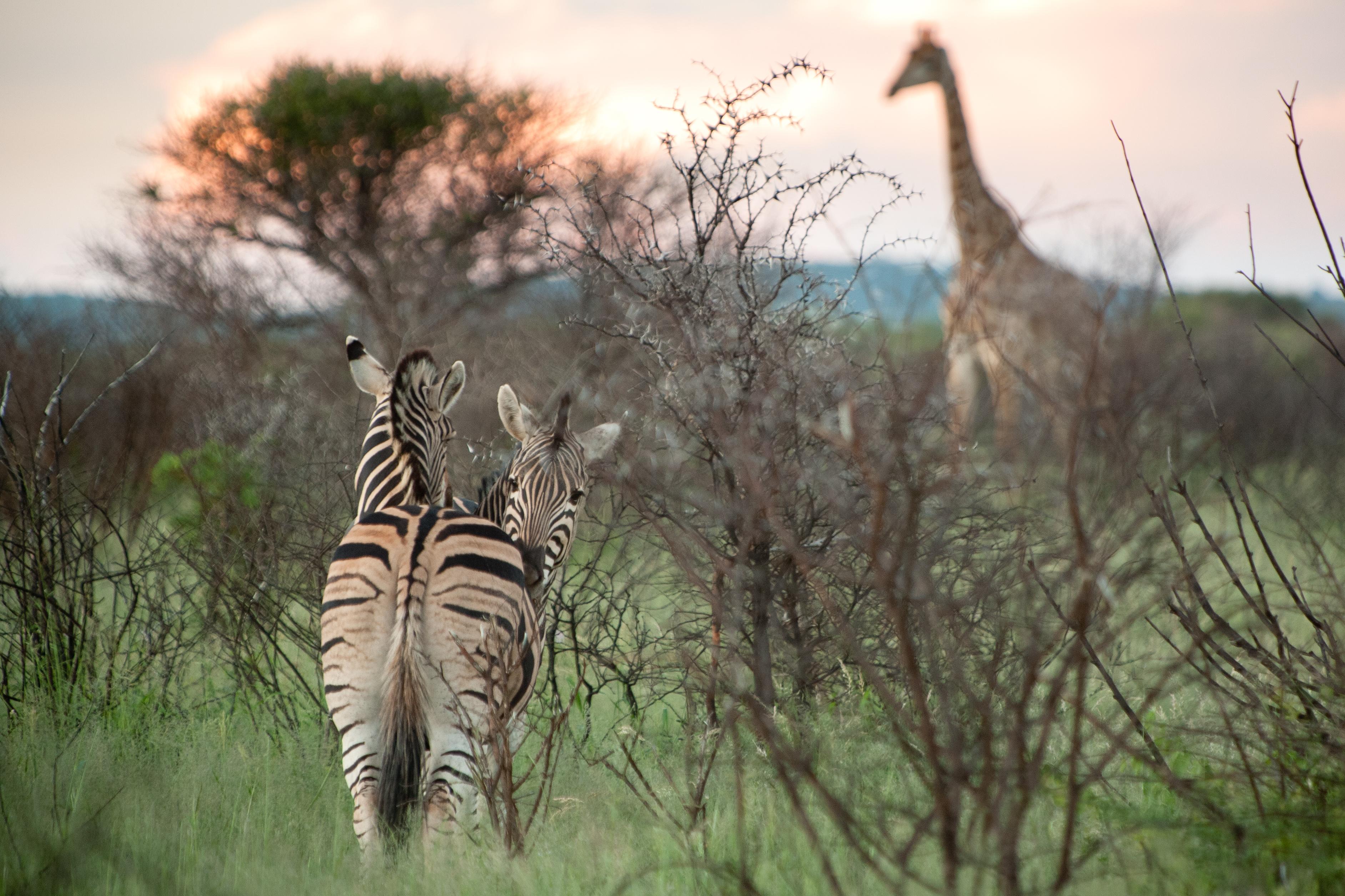 Sudafrica-298