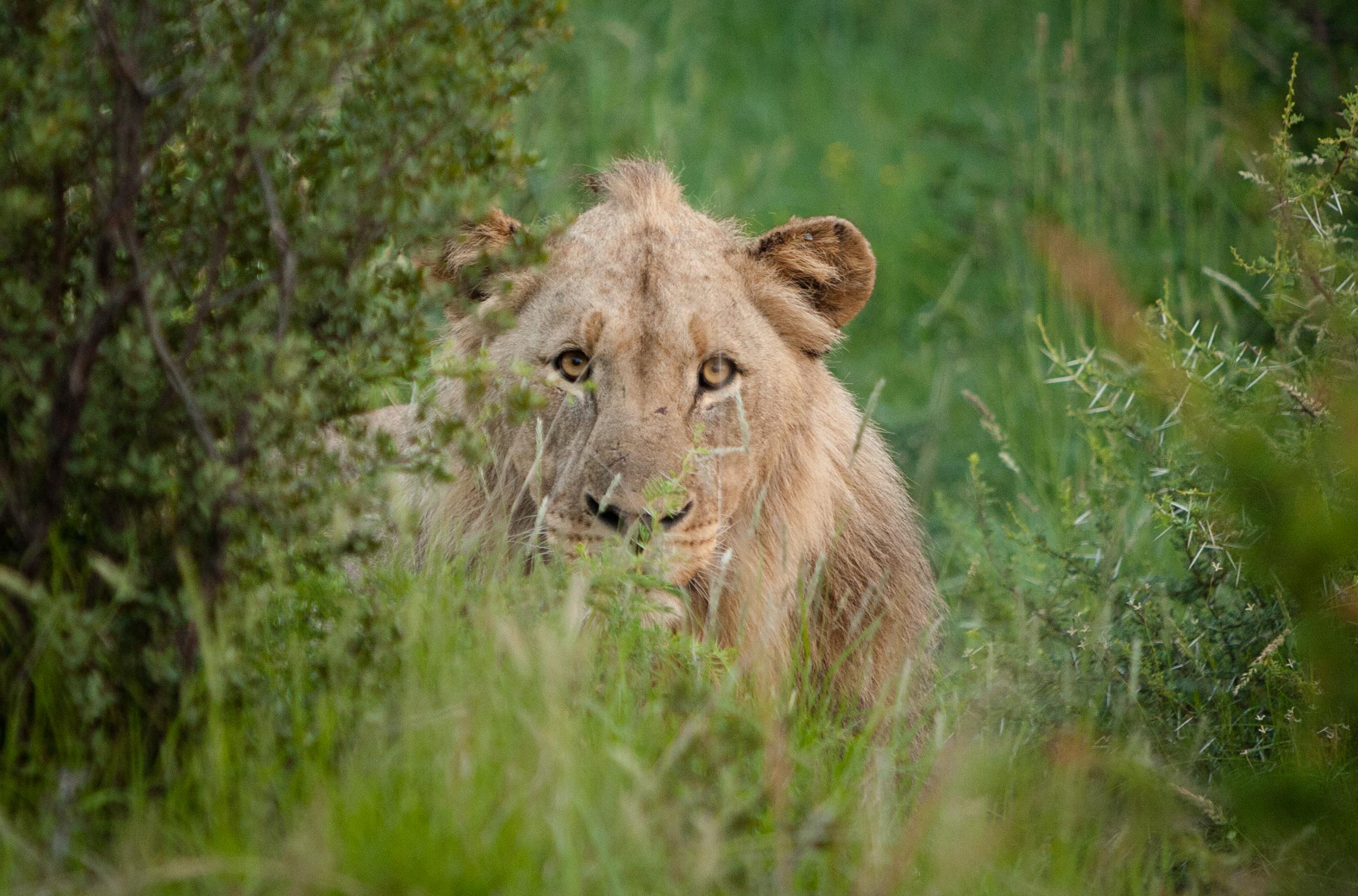 Sudafrica-461