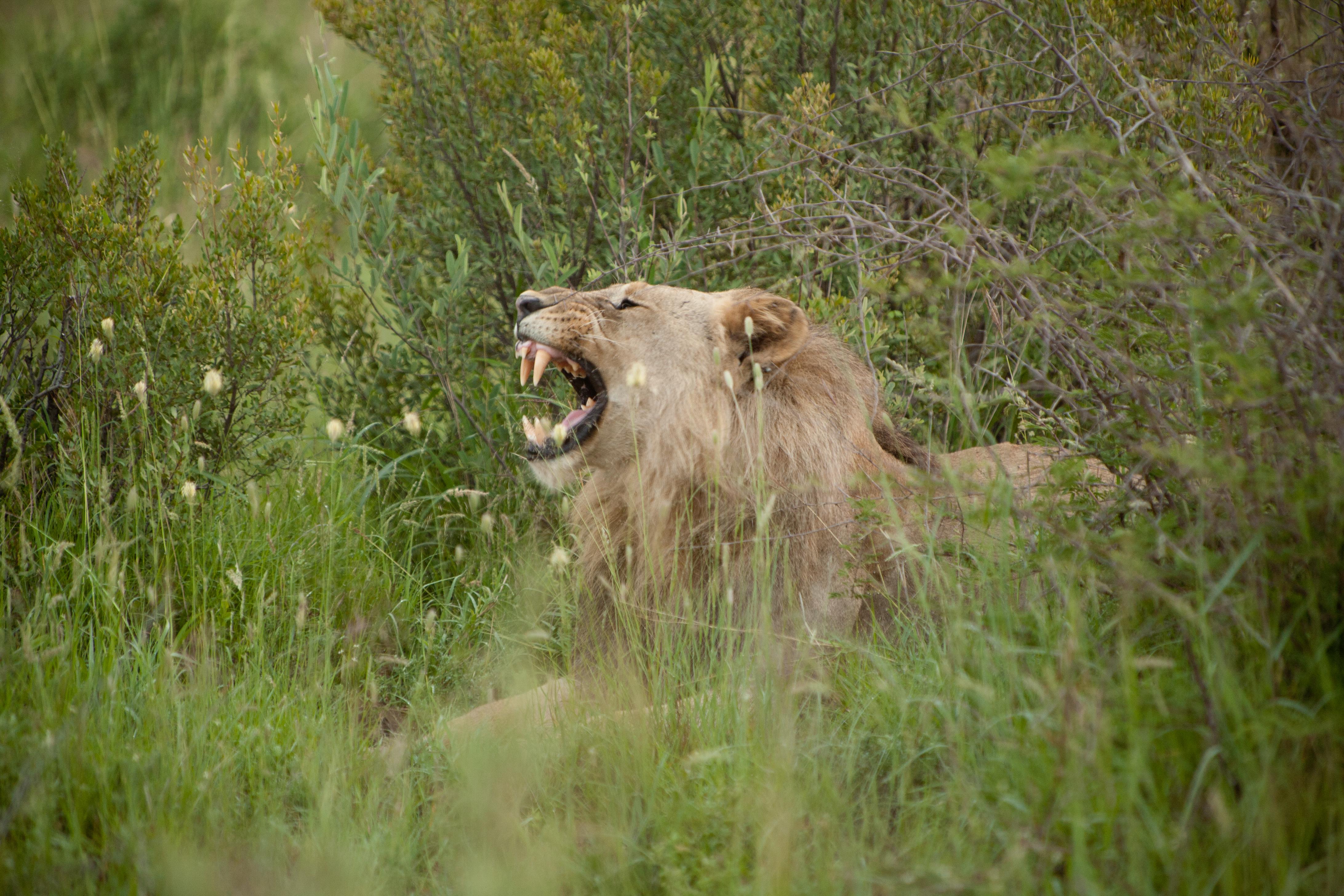 Sudafrica-474