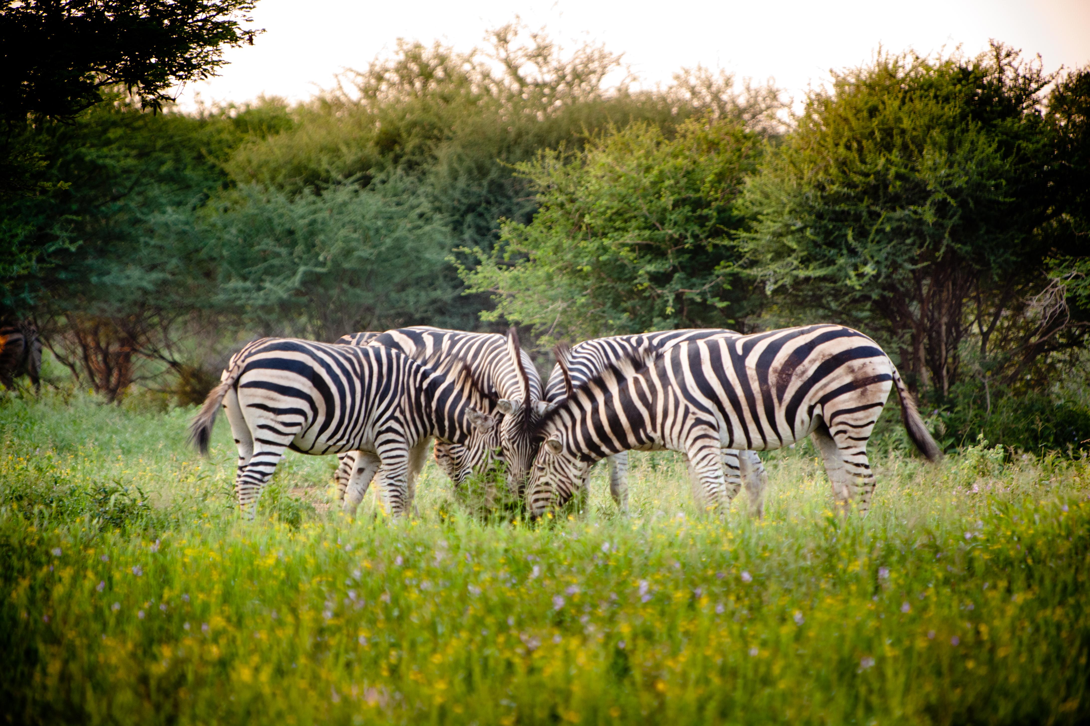 Sudafrica-480